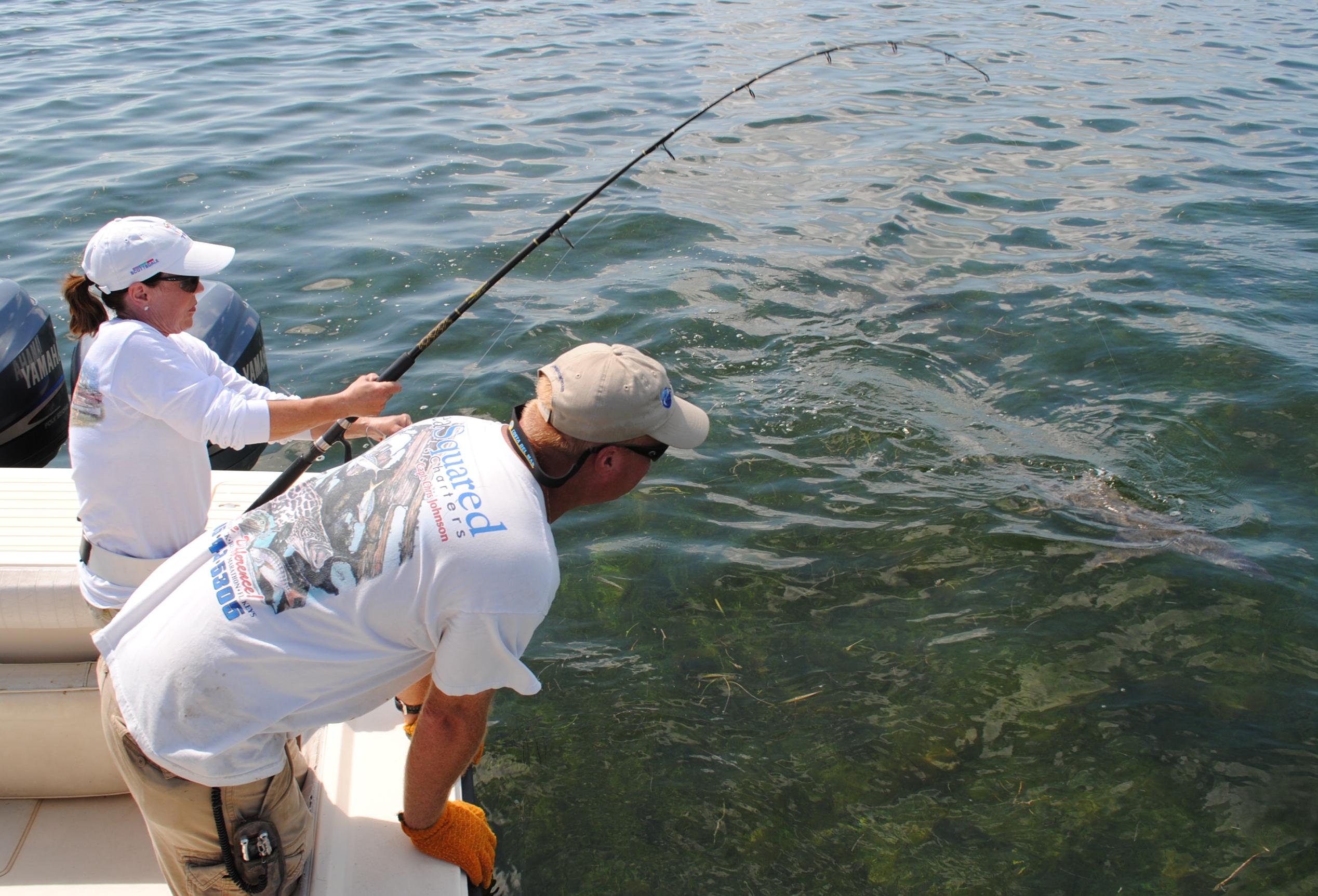 Close encounters of the shark kind in the florida keys for Fishing marathon fl